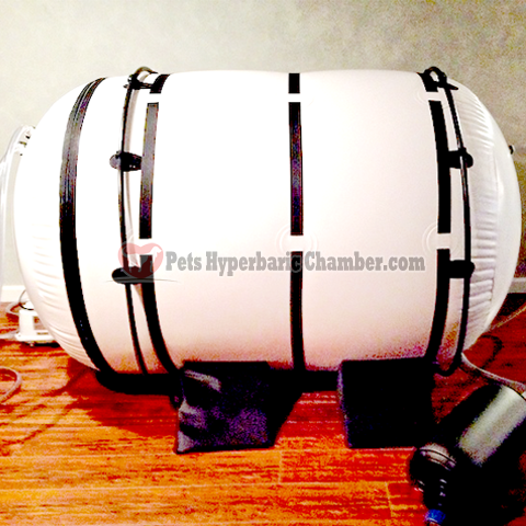 Complete Pet Hyperbaric Oxygen Chamber (HBOT) For only $10,500 you get the entire system