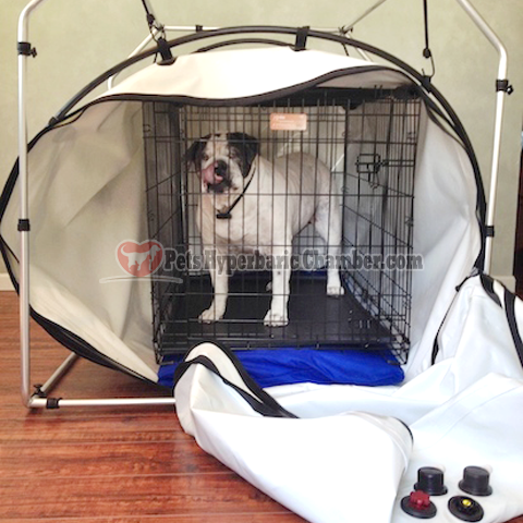 Pets Hyperbaric Chamber Features